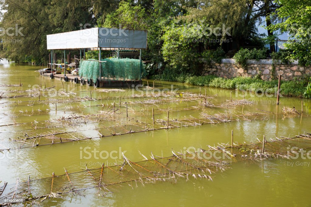 Fish farming in  pond and net stock photo