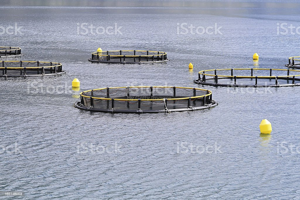 Fish farming nets royalty-free stock photo