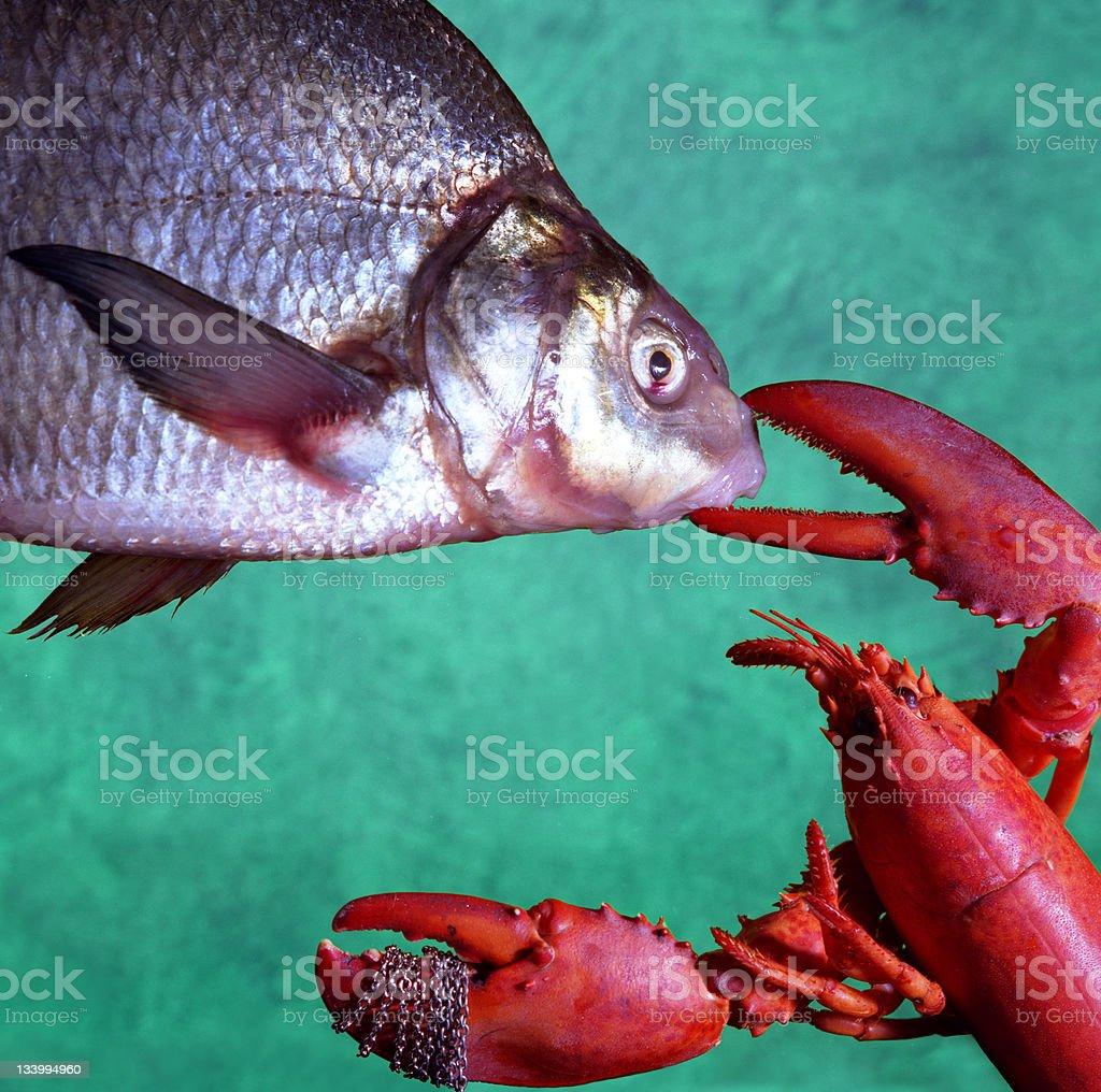 Fish Fight stock photo