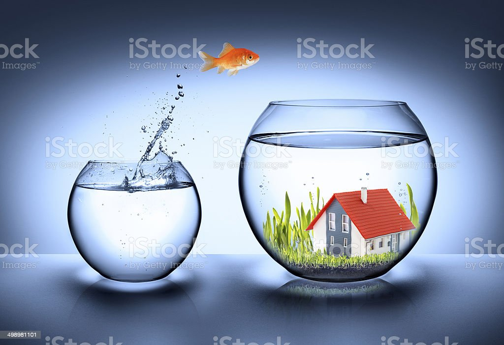 fish find house stock photo