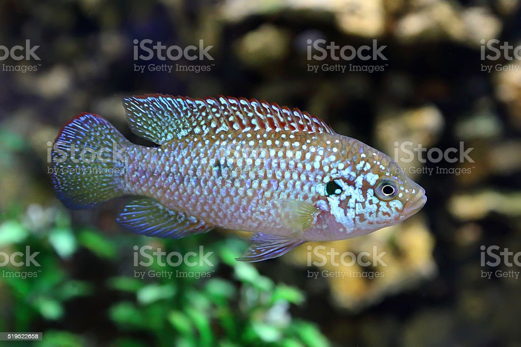 Fish floats against stones stock photo