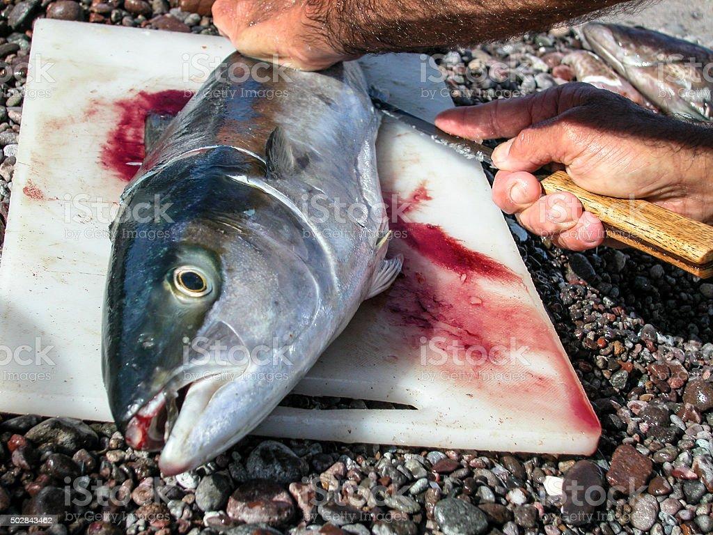 Fish for dinner, again stock photo