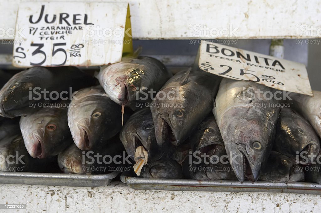 fish for sale stock photo