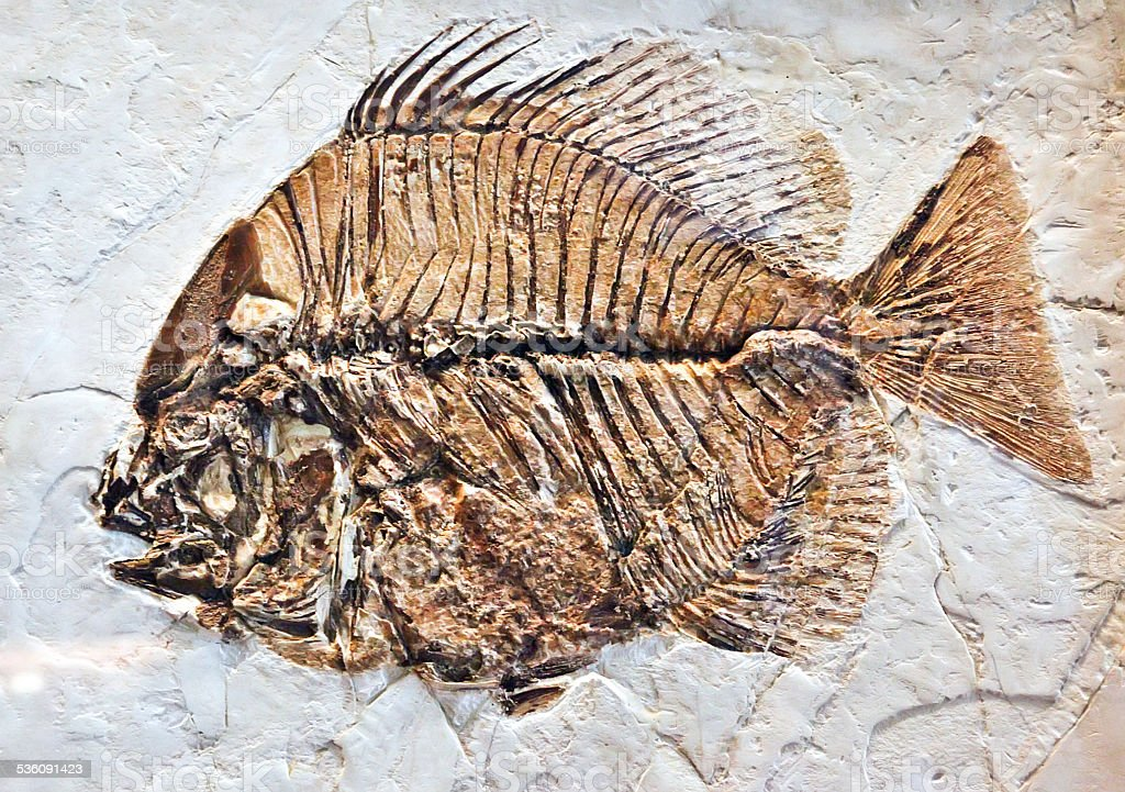 Fish fossil stock photo