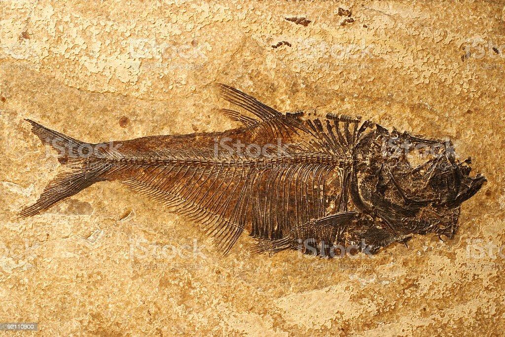 Fish fossil stock photo