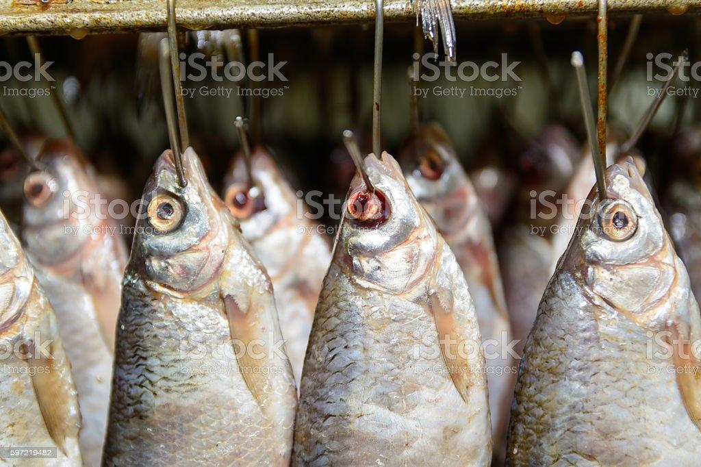 Fish hanging on hooks stock photo