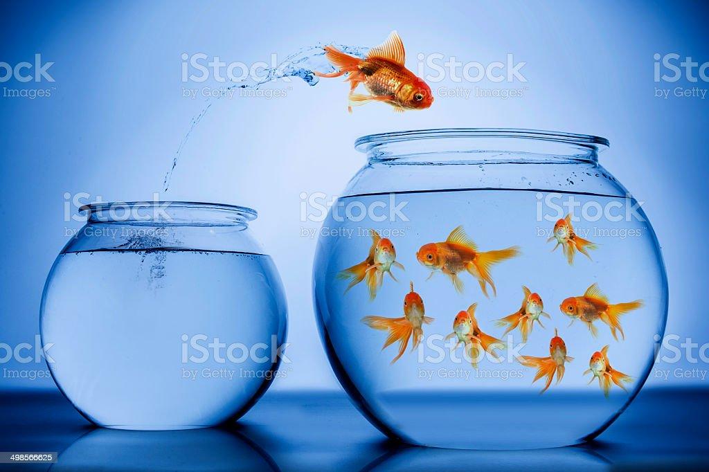Fish happily jumping stock photo