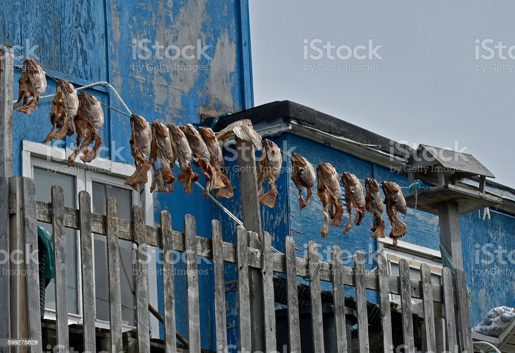 Fish Heads in Greenland stock photo