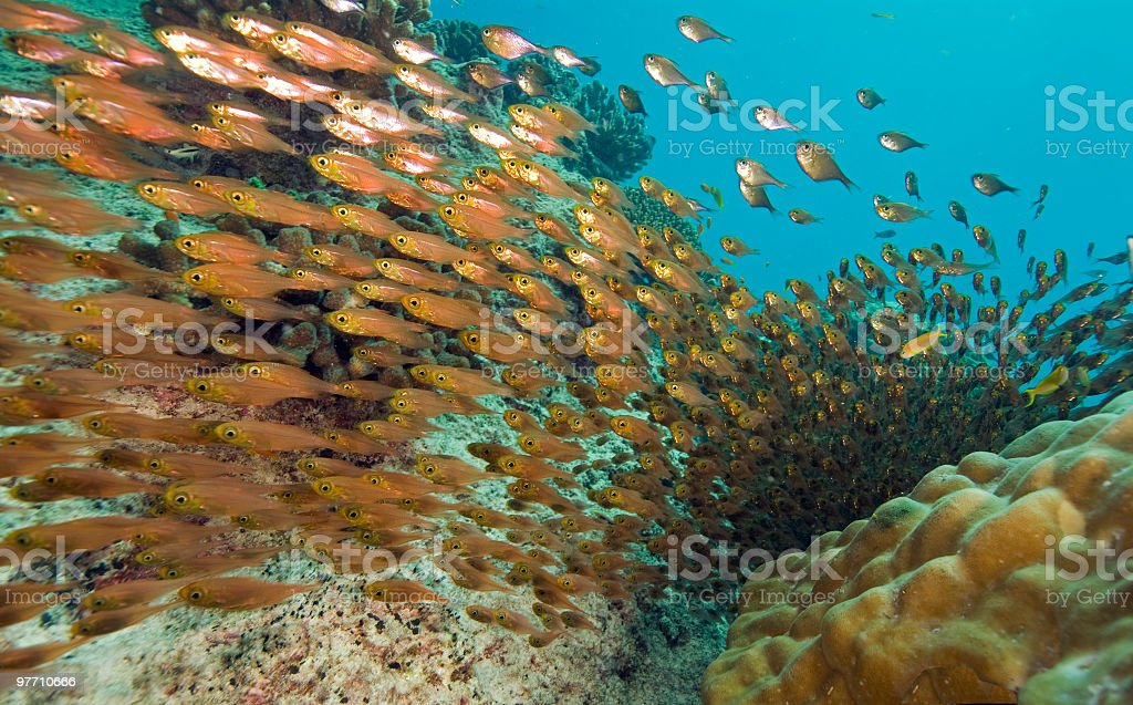 fish highway royalty-free stock photo