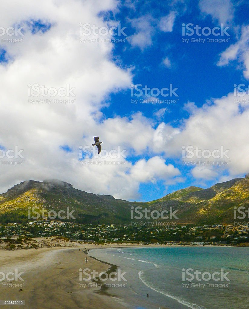 Fish Hoek Beach with Mountains Bird and Sea stock photo