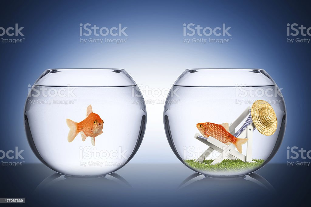 fish holiday concept stock photo