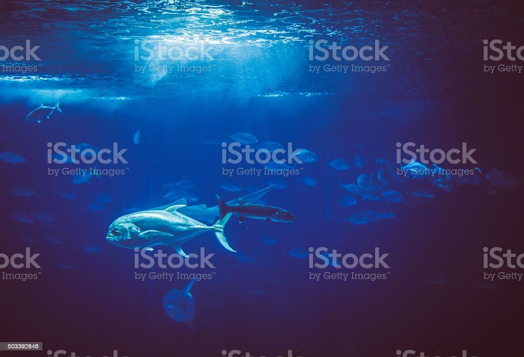 Fish in a big blue aquarium stock photo