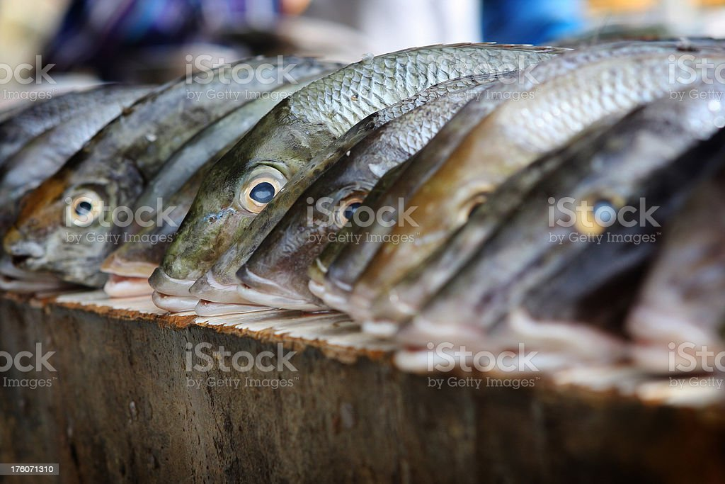 fish in a line royalty-free stock photo