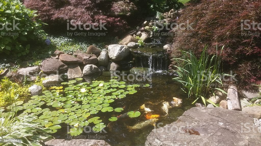 Fish in a pond stock photo