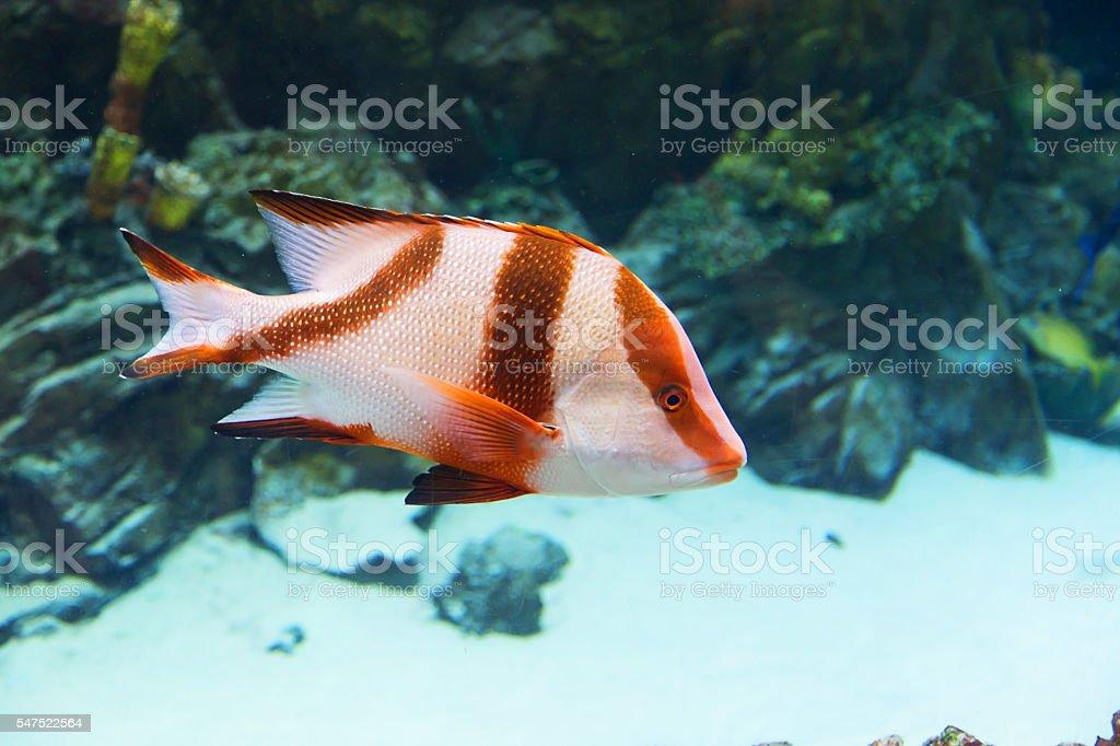 fish in an aquarium stock photo