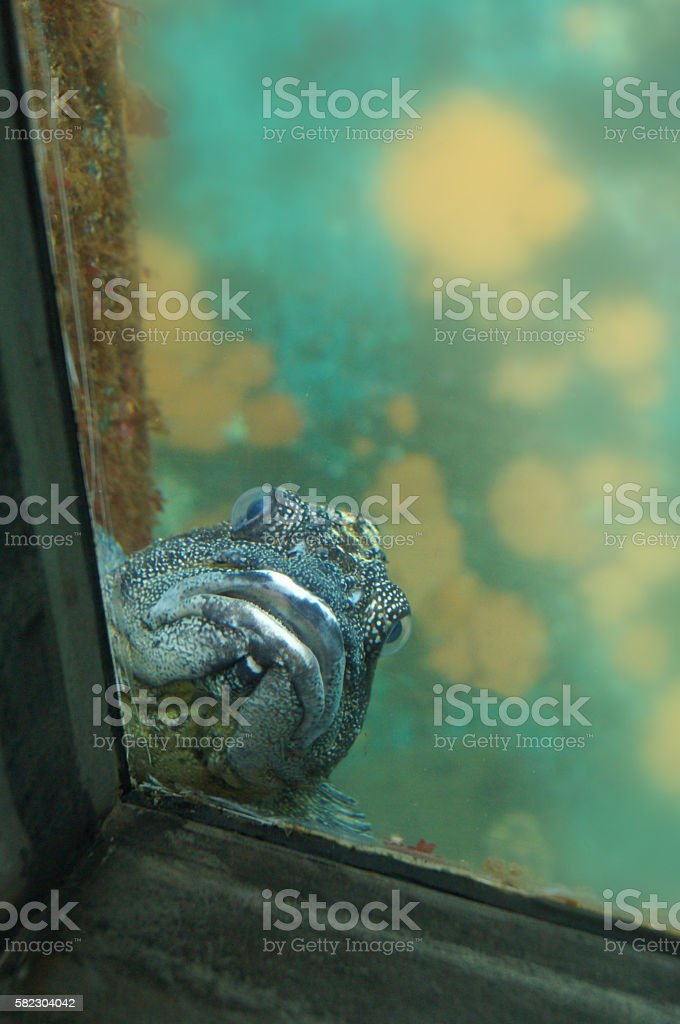 Fish in Aquarium Background stock photo
