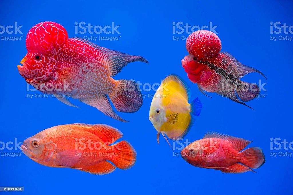 Poissons dans un aquarium  photo libre de droits