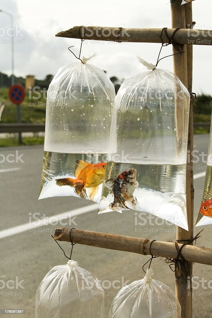 Fish in bags royalty-free stock photo