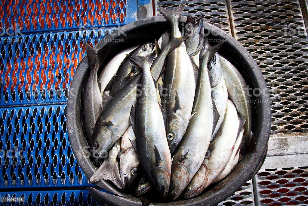 Fish in basket stock photo