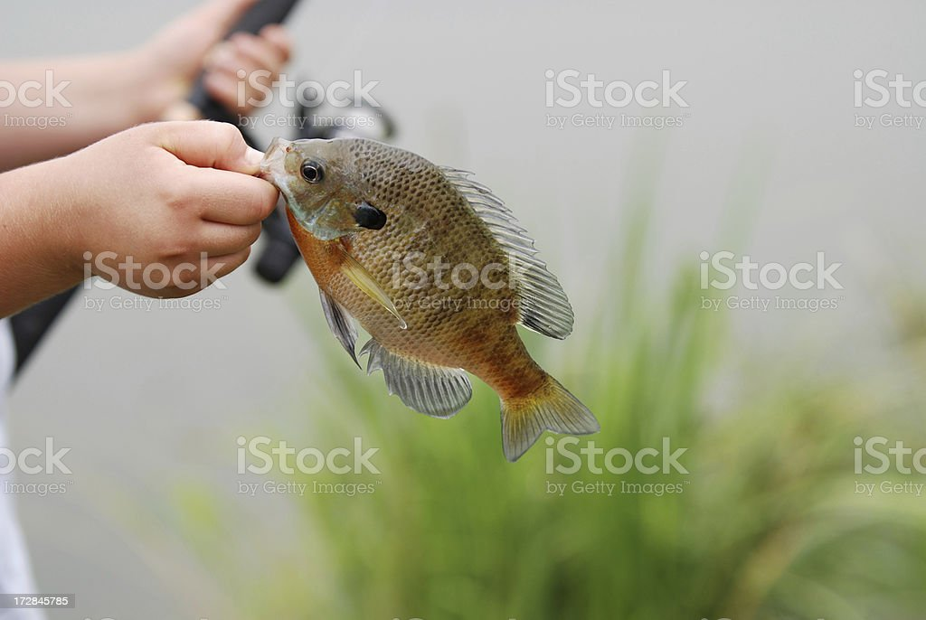 Fish in Child's Hand royalty-free stock photo