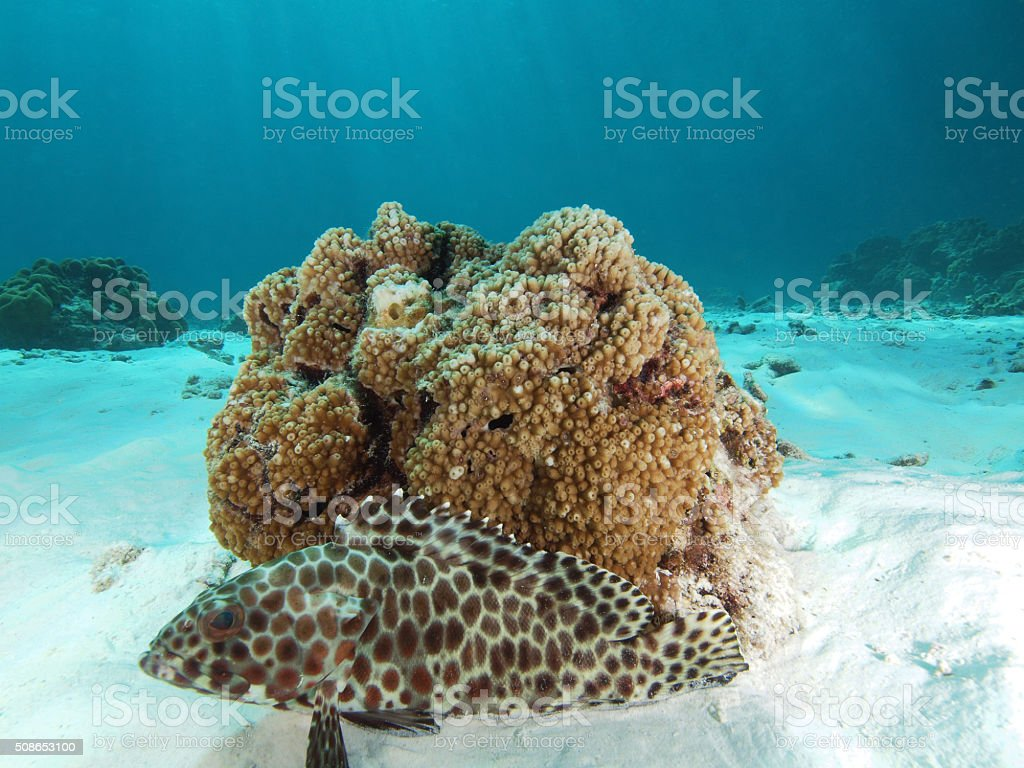 Fish in front of a coral stock photo