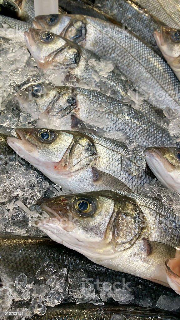 fish in ice stock photo