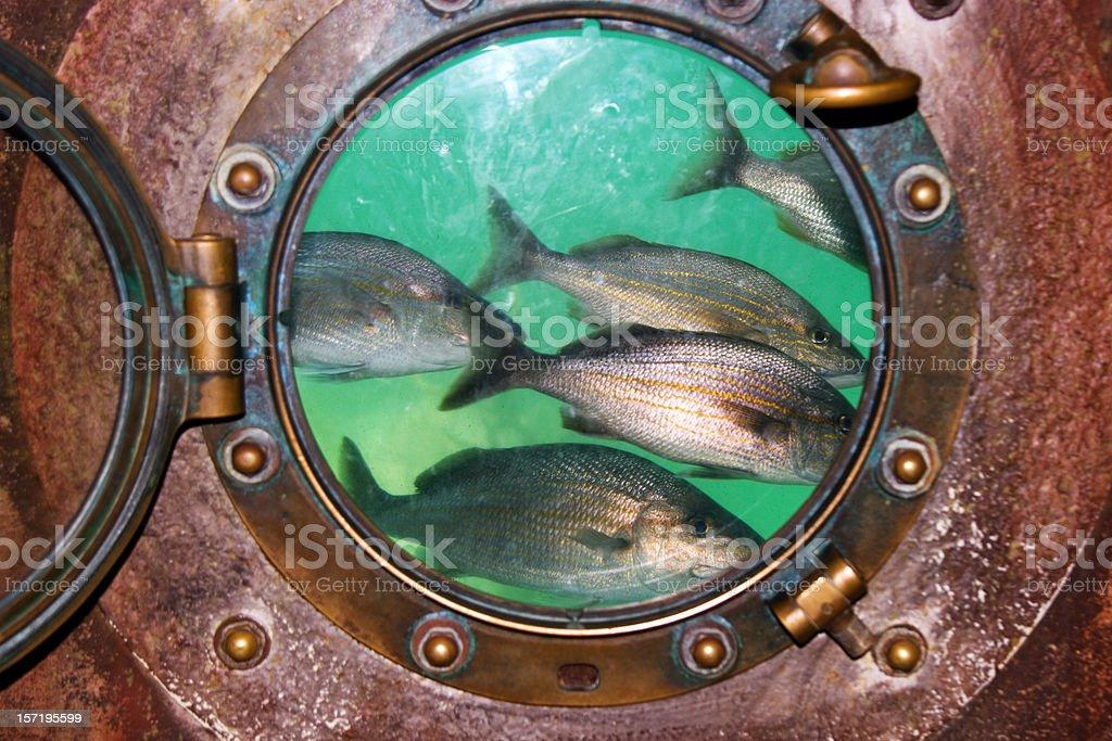 Fish in porthole royalty-free stock photo