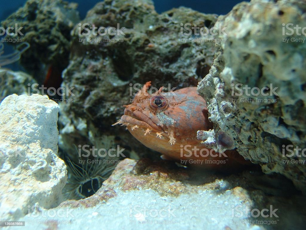 Fish in Rocks royalty-free stock photo