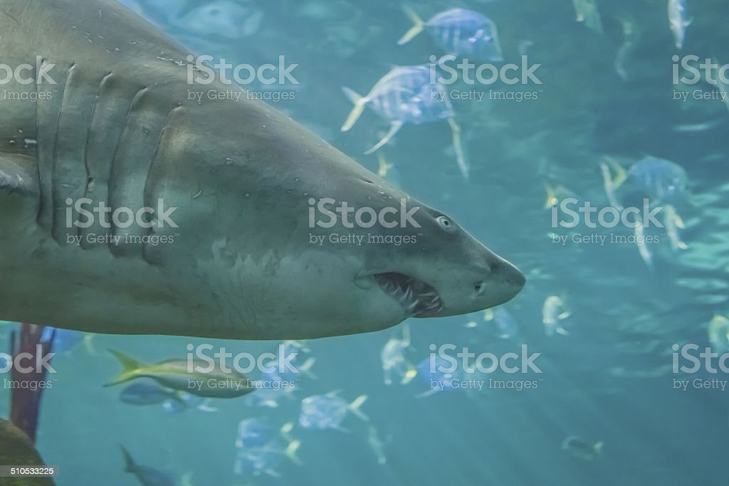 Fish in Saltwater, Variety of Scenes stock photo