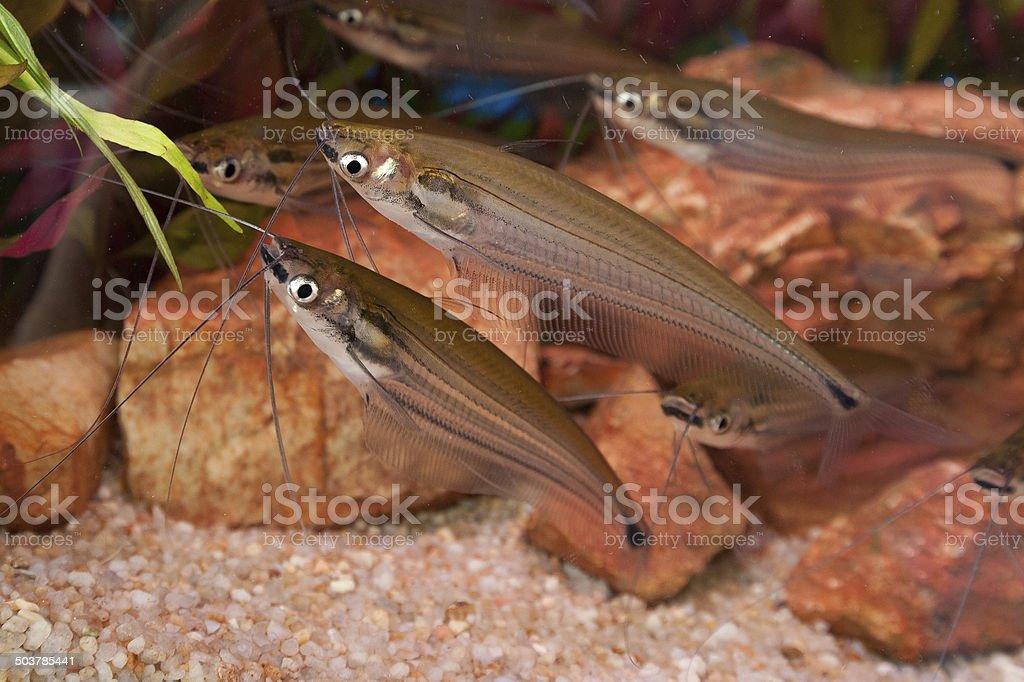 fish in stream. stock photo
