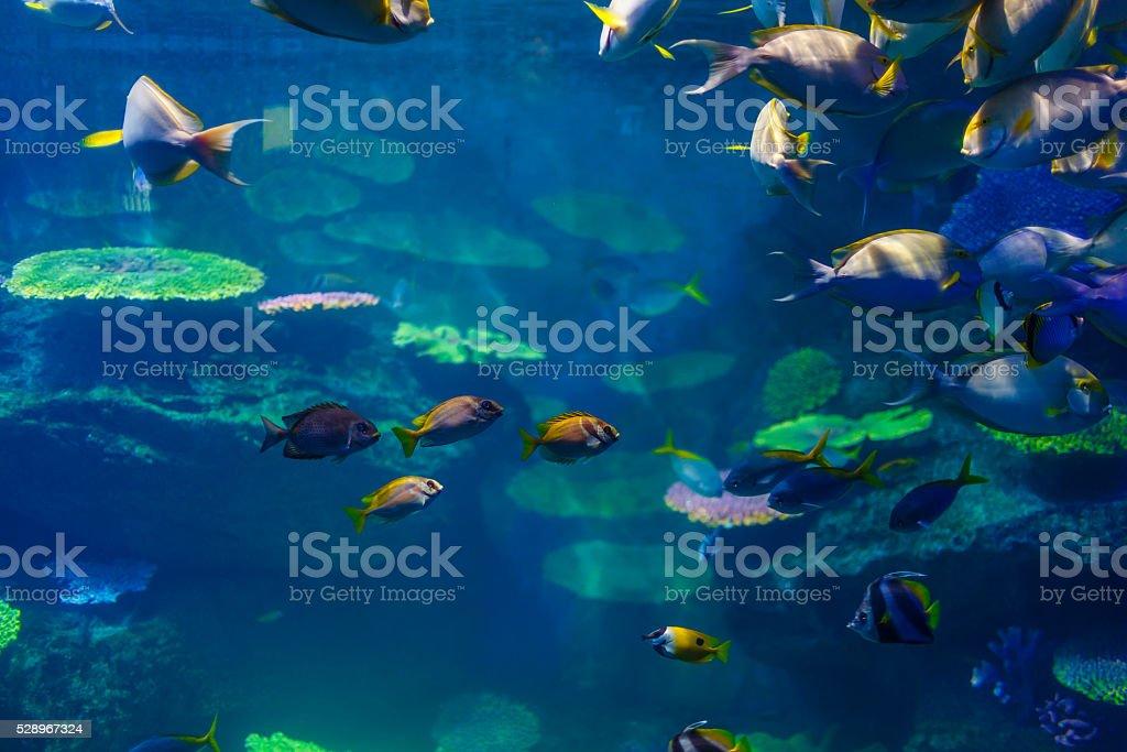 fish in the aquarium in Bangkok stock photo