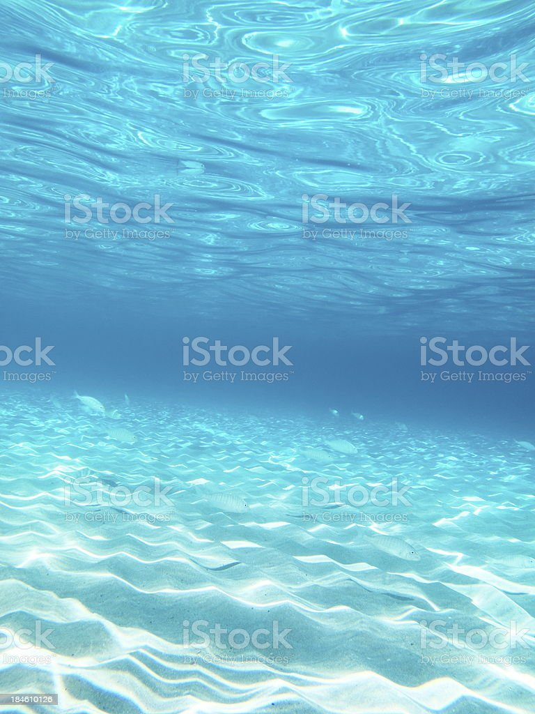 Fish in the sunny sea water stock photo