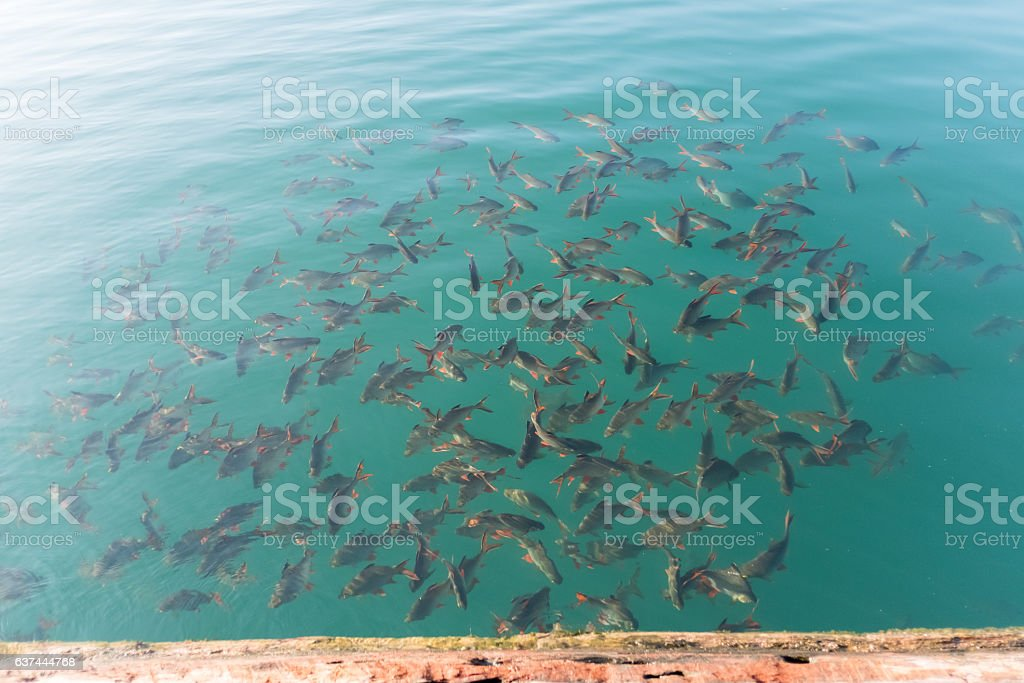 fish in water stock photo