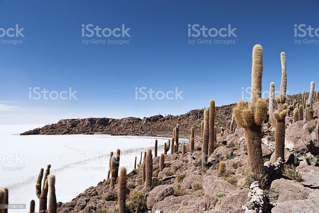 Isla del Pescado on Salar de Uyuni stock photo