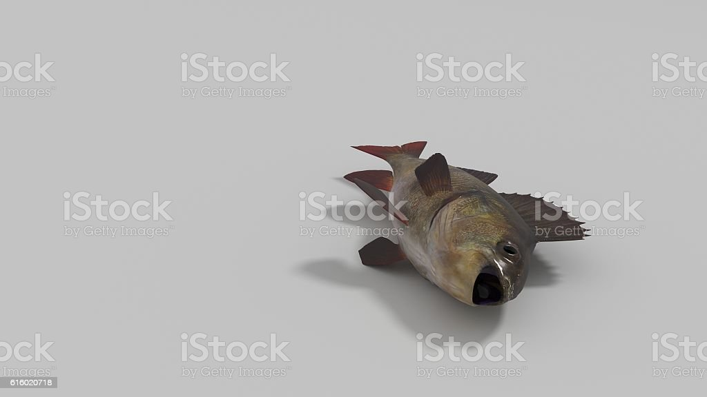 fish isolated in white space 3d render stock photo