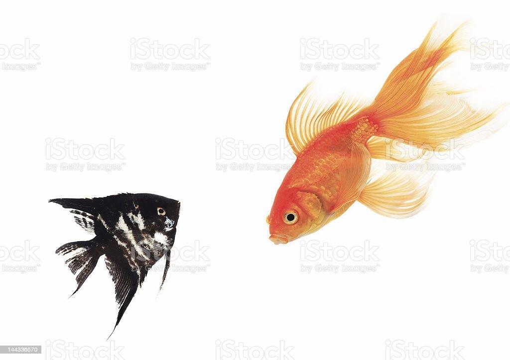 fish isolated royalty-free stock photo