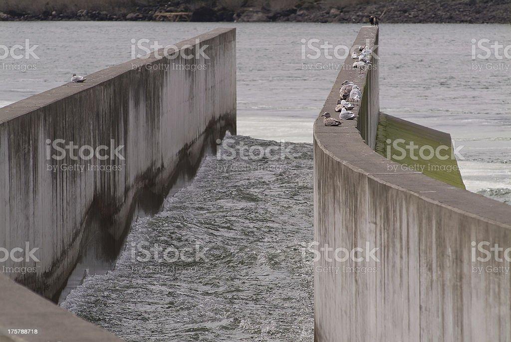 Fish Ladder Bonneville Lock and Dam Columbia River Gorge Oregon stock photo