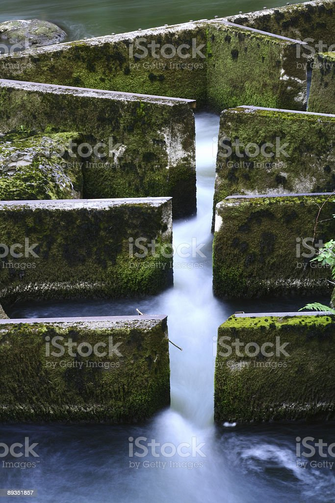 Fish Ladder royalty-free stock photo