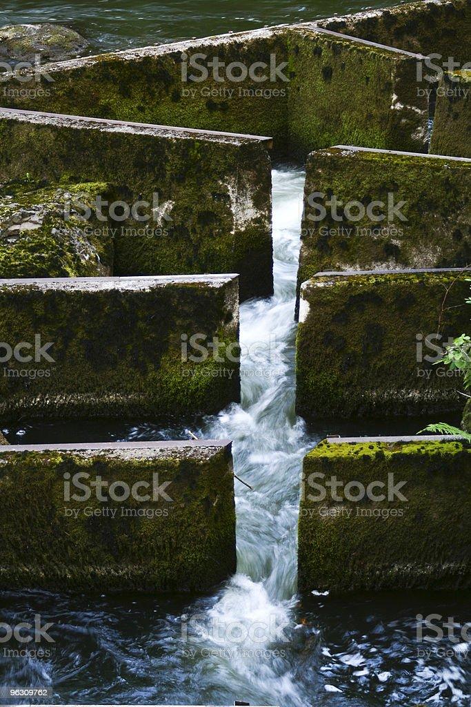 Fish Ladder stock photo