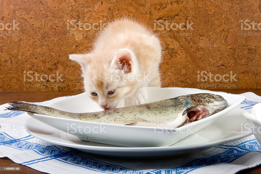 Fish licking royalty-free stock photo