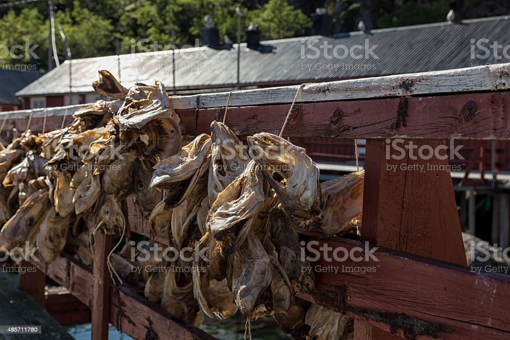 Fish line royalty-free stock photo