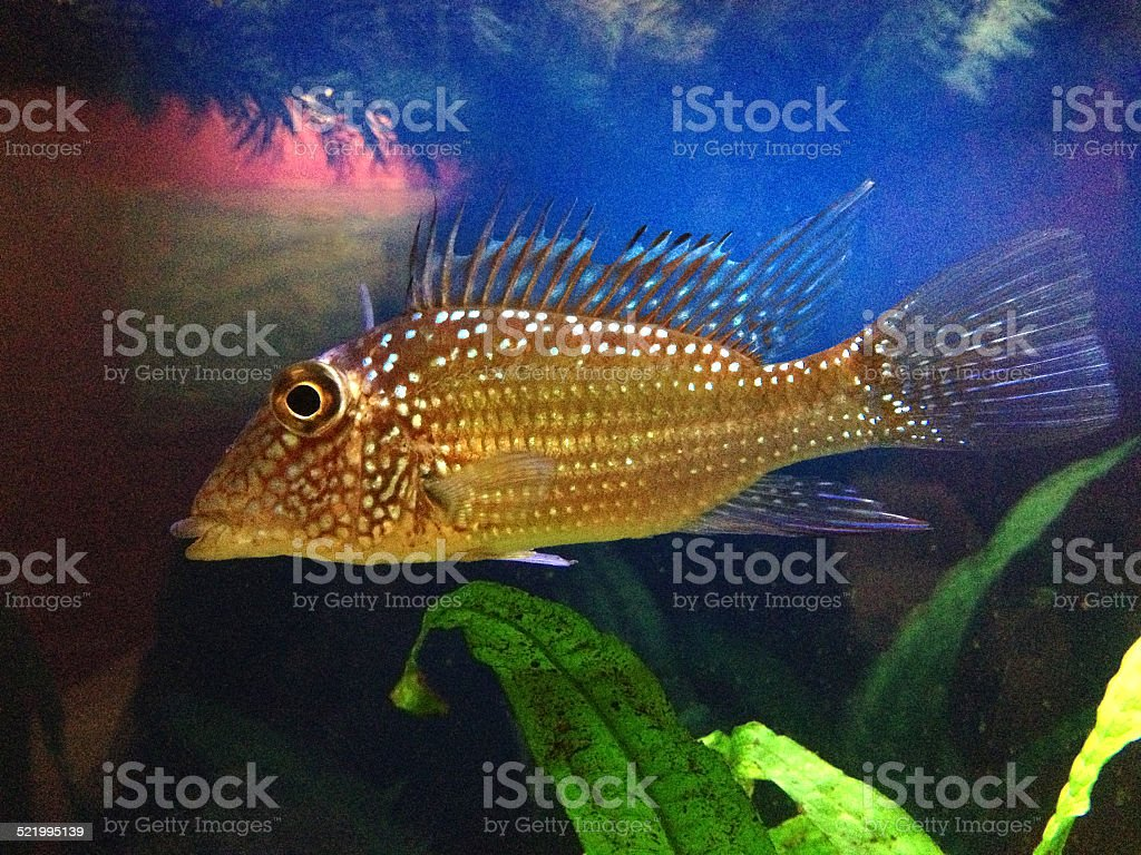 Fish Look stock photo