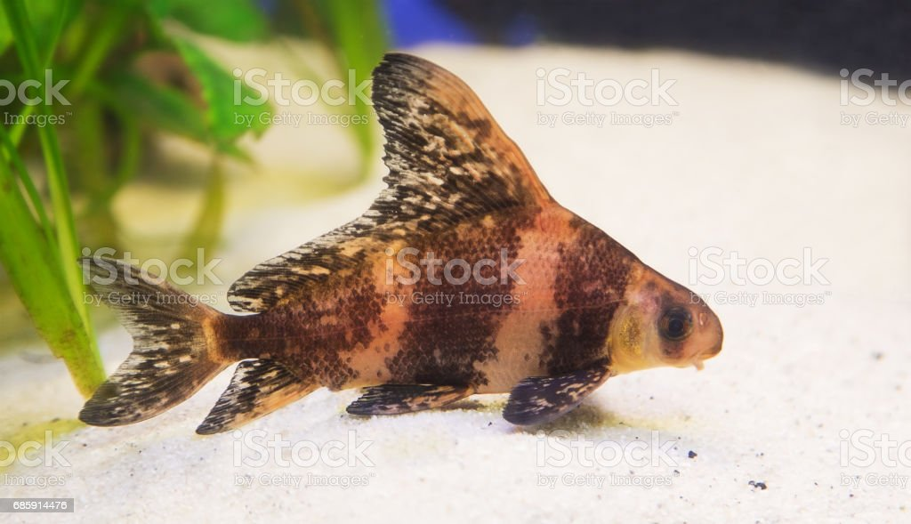 Fish lying on the sand stock photo