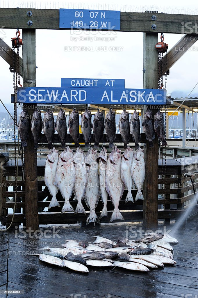 Fish Market at Seward of Alaska stock photo