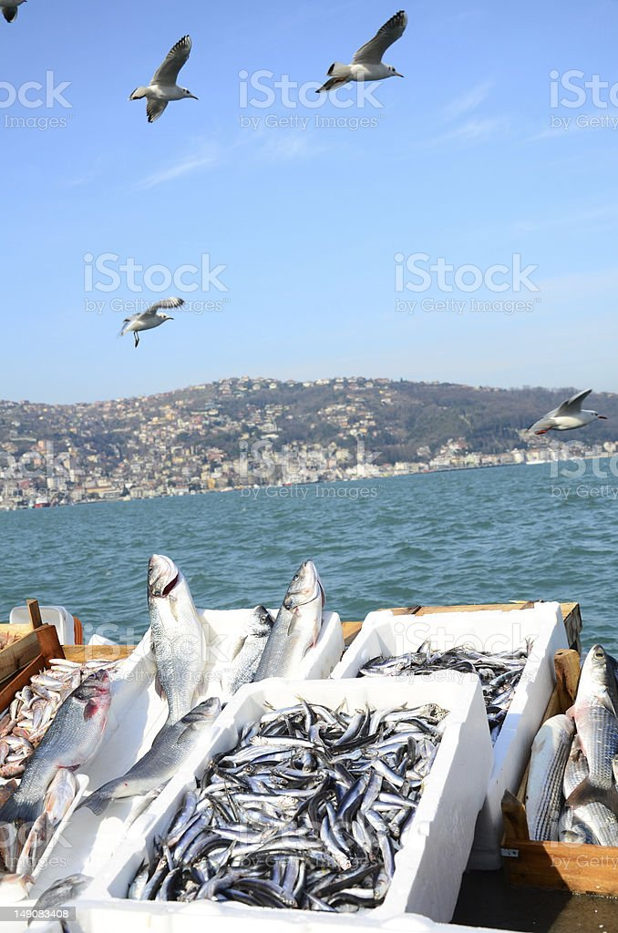 fish market by sea royalty-free stock photo