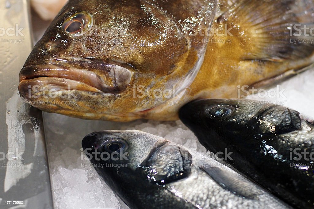 fish market - Goldblotch grouper and european seabass stock photo