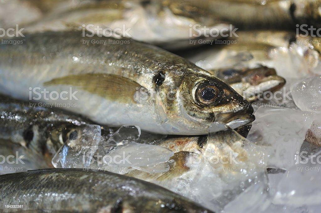 Fish Market, royalty-free stock photo