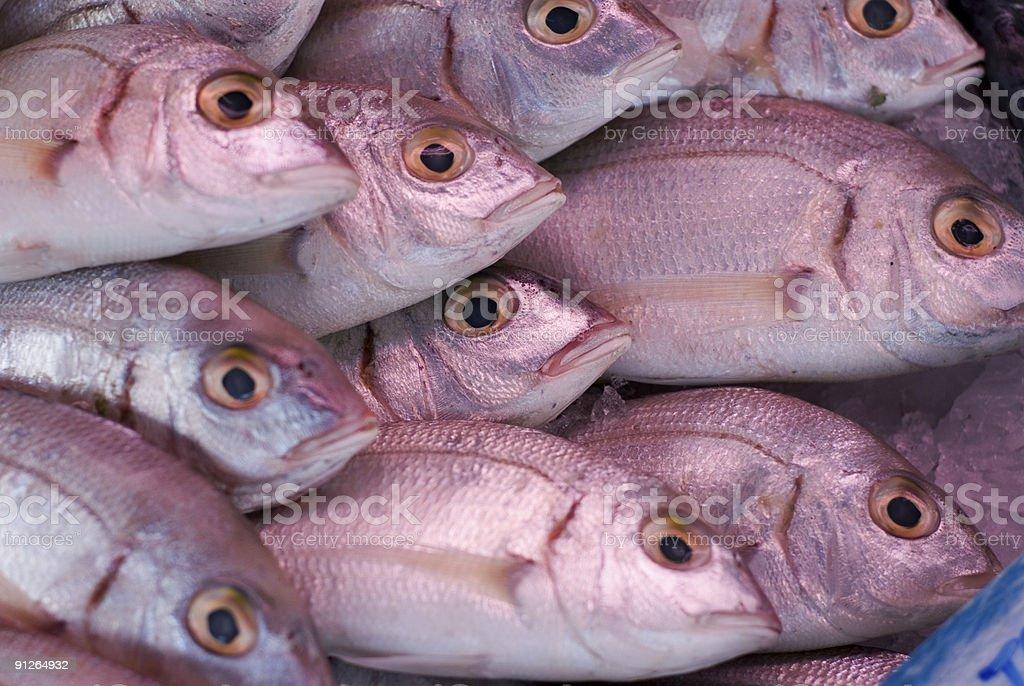 Fish Market Series stock photo