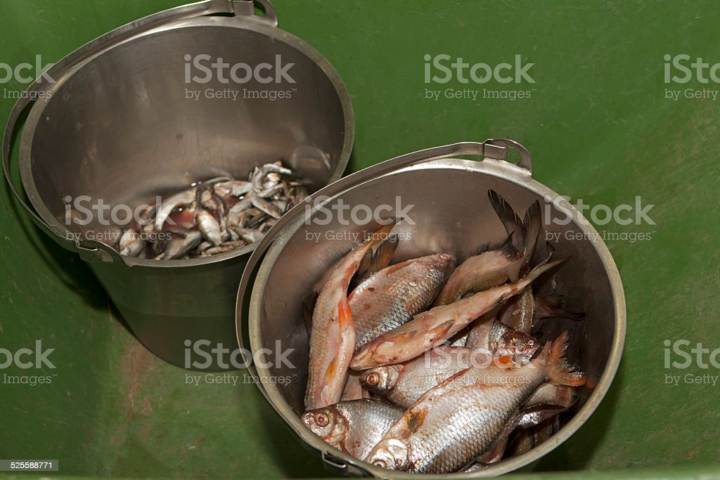 Fish meal for the animals. stock photo