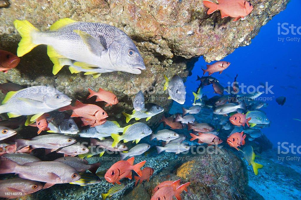 Fish mix royalty-free stock photo